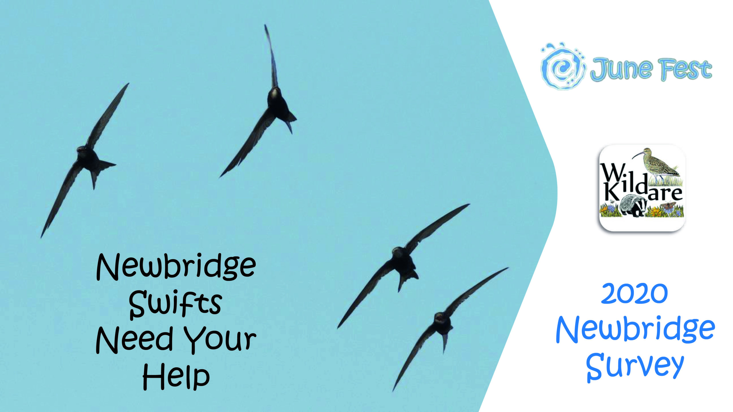 Newbridge Swifts Survey Walk with Wild Kildare
